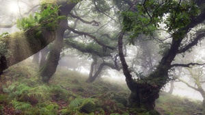 Fog Forest Moss Tree 2048x1300 wallpaper