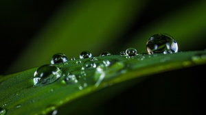 Greenery Macro Nature Water Drop 3419x2070 Wallpaper