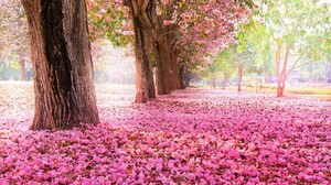 Blossom Earth Park Petal Pink Flower Tree Tree Lined 2560x1600 Wallpaper