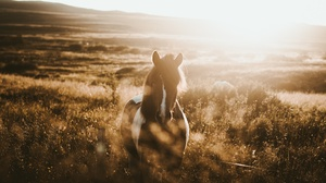 Animal Horse 2048x1365 Wallpaper