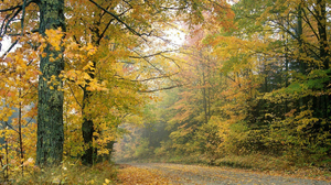 Fall Forest Nature Path Tree 1920x1440 Wallpaper