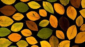 Artistic Colorful Fall Leaf Oak 5184x3456 Wallpaper