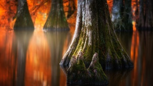 Fall Moss Nature Reflection Tree Trunk Water 2048x1218 Wallpaper