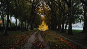 Blur Fall Leaf Nature Park Tree 1920x1080 Wallpaper