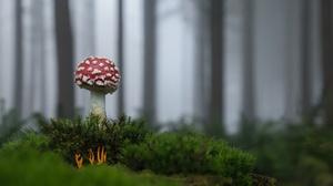 Fall Moss Mushroom Nature 2048x1290 Wallpaper