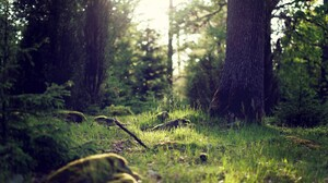 Earth Forest 2560x1600 Wallpaper