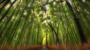 Earth Bamboo 2560x1600 Wallpaper