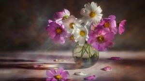 Flower Pink Flower White Flower Vase Cosmos 2000x1358 wallpaper