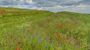 Field Nature Landscape Colorful Flowers Plants 3840x2160 Wallpaper