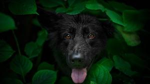 Dog Pet 2048x1367 Wallpaper