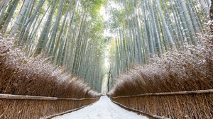 Bamboo Nature Path Winter 2560x1707 Wallpaper