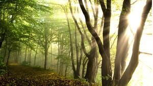 Nature Tree Leaf Sunlight 1920x1080 wallpaper