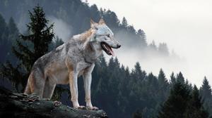 Animal Wolf 1920x1280 wallpaper