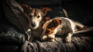 Dog Pet 3840x2160 wallpaper