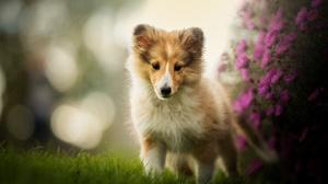 Dog Pet Baby Animal Puppy Depth Of Field Bokeh Purple Flower 2048x1363 wallpaper