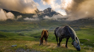 Cloud Fog Horse Mountain Pasture 2048x1363 Wallpaper