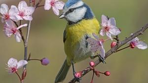 Bird Wildlife Blossom Flower 2400x1607 Wallpaper