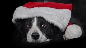 Dog Pet Santa Hat 2674x2139 Wallpaper