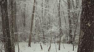 Winter Trees Landscape Forest Brown Beige Snow Nature 2048x1371 Wallpaper