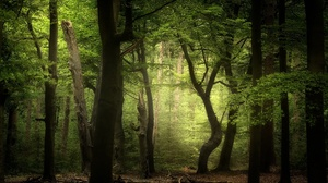 Earth Forest 2048x1300 wallpaper