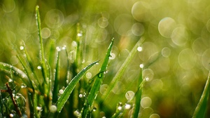 Bokeh Grass Macro Water Drop 2048x1152 Wallpaper