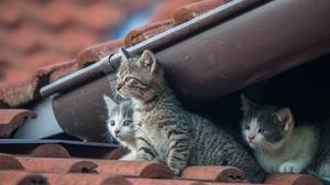 Kitten Pet Baby Animal 2048x1280 Wallpaper
