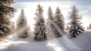 Nature Snow Sunbeam Tree Winter 2048x1225 Wallpaper