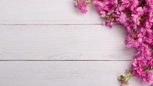 Pink Flower Wood 5117x3412 Wallpaper