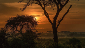 Sunset Trees Silhouette Africa Nature Landscape 1920x1200 Wallpaper