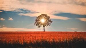Nature Sunbeam Tree 6000x2825 Wallpaper