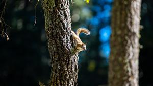 Nature Squirrel Wildlife Tree Bark 6016x4016 wallpaper