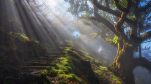 Nature Steps Sunbeam Tree 2500x1667 Wallpaper