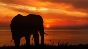 Elephant Silhouette Sunset 2631x1754 Wallpaper