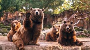 Bear Depth Of Field Zoo Predator Animal 4000x2667 Wallpaper