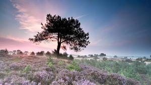 Field Flower Fog Morning Sunrise Tree 3500x2333 Wallpaper