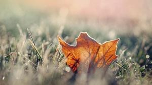 Grass Leaf Macro Nature Sunny 2880x1800 Wallpaper