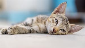 Baby Animal Cat Kitten Pet 2048x1365 wallpaper