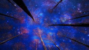 Earth Tree Sky Starry Sky Canopy 1920x1200 Wallpaper
