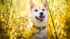 Dog Pet 2000x1333 Wallpaper