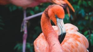 Bird Flamingo 5762x4000 wallpaper