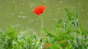 Nature Flower Red Flower 2560x1920 Wallpaper