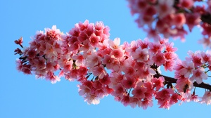 Blossom Flower Nature Pink Flower Spring 2048x1365 Wallpaper