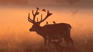 Bird Deer Fog Wildlife 2048x1365 Wallpaper