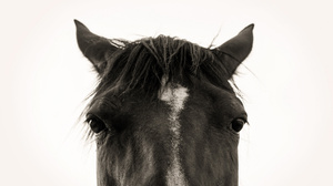 Black Amp White Close Up Horse Stare 2048x1365 Wallpaper