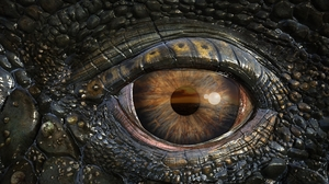 Animal Close Up Crocodile Eye Reptile Wildlife 1920x1080 Wallpaper