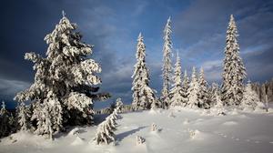 Snow Tree Winter 2880x1800 Wallpaper