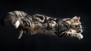 Cat Animal Jump 2048x1368 Wallpaper