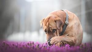 Depth Of Field Dog Pet 6000x4000 Wallpaper