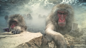 Japanese Macaque Monkey Phone 1920x1080 Wallpaper