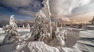 Cloud Snow Fir Tree 2000x1334 Wallpaper